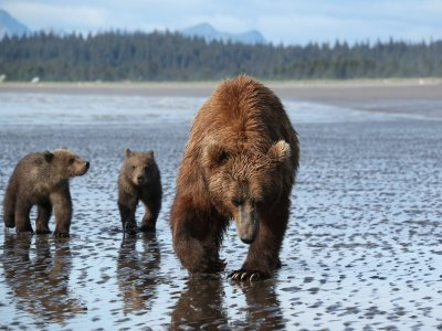 Scenic Bear Viewing
