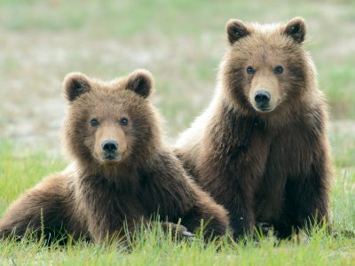 10%-20% OFF BEAR VIEWING TRIPS!