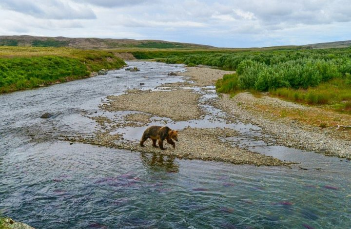 15 Incredible Eco-Tourism Adventures That You Can Have On The Kenai